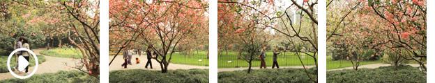 602055-shanghai-peach-blossom